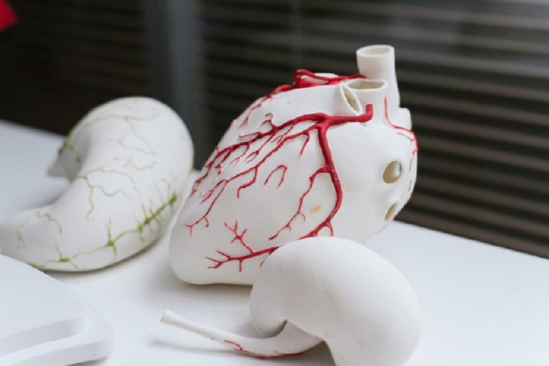 مدل-3-بعدی-قلب-مصنوعی-توسط-مهندسین-پزشکی-گرایش-بیومکانیک
